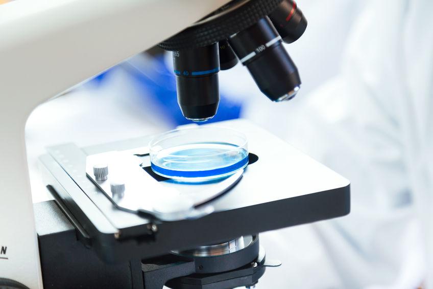 amostra para microscópio